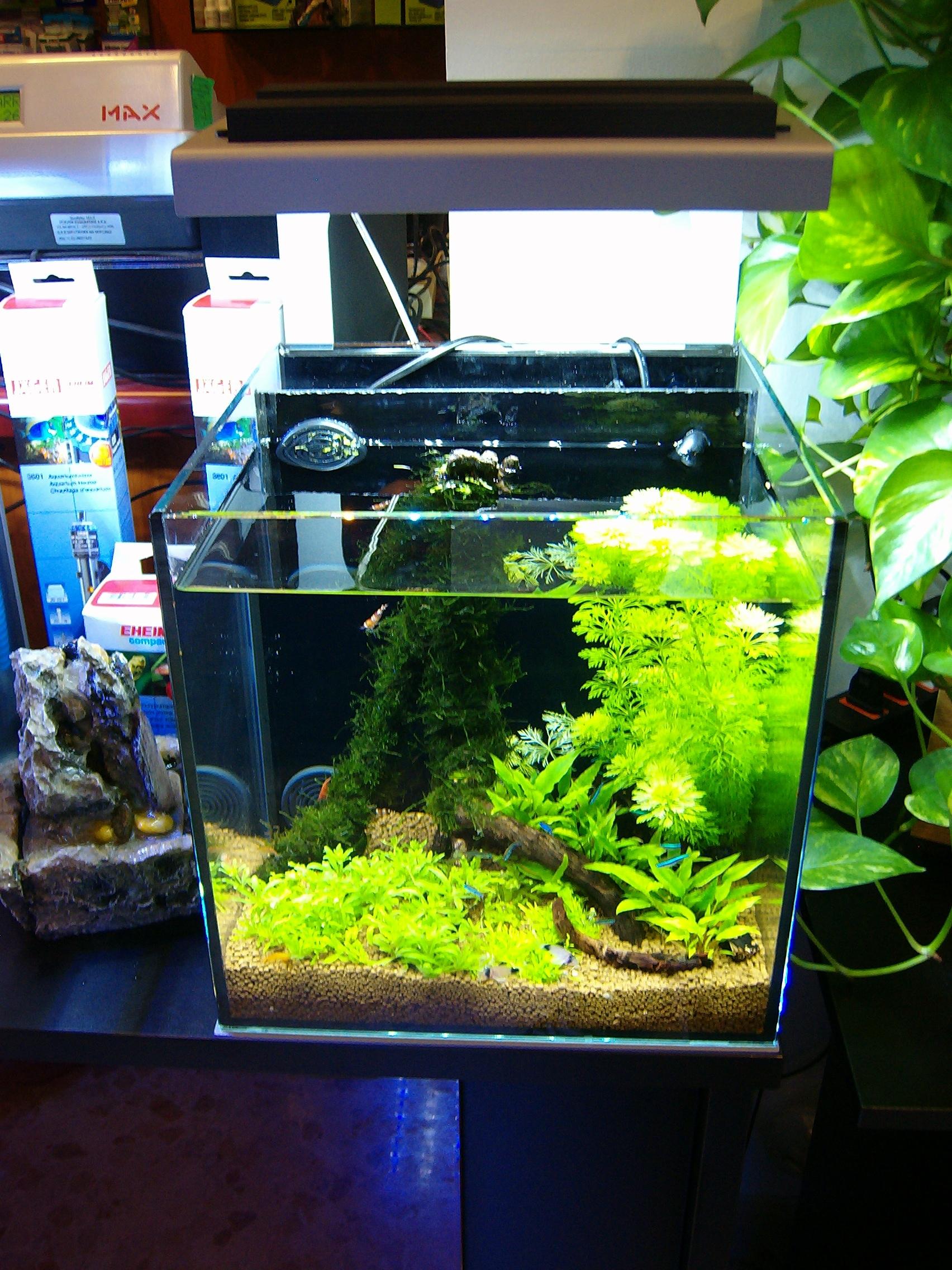 Pesci tropicali d acquario il mio acquario di acqua dolce for Acquario marino 100 litri prezzo