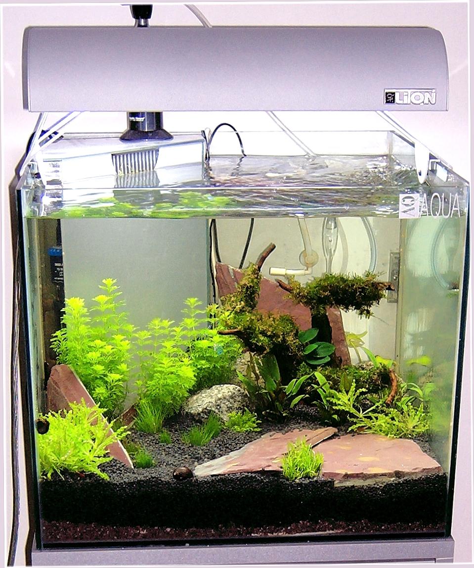 Acquari caraibi reggio emilia pesci tropicali d 39 acqua for Acqua acquario